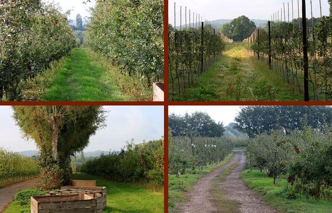 Views Hill Farm Orchard