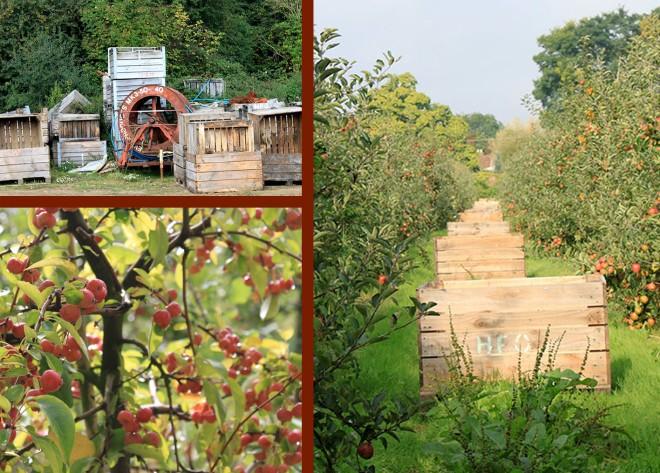 apples bins at Hill Farm Orchard