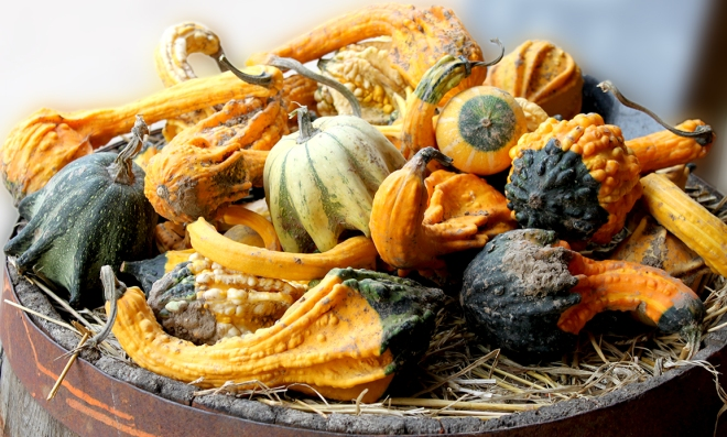 Gourds on offer at Stoke Fruit Farm