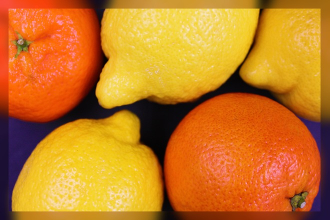 Season Citrus Fruit from Outside the UK