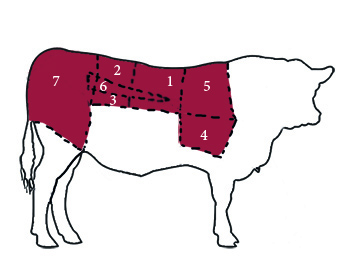 meat cuts illustration